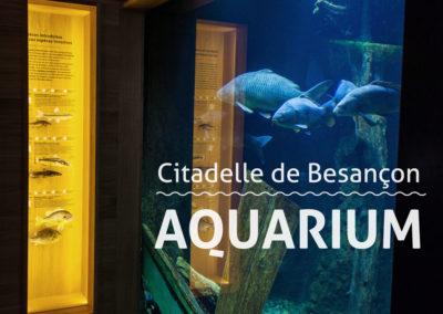 L'Aquarium de la Citadelle fait peau neuve